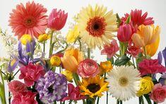 Λουλούδια με έντονα χαρακτηριστικά χρώματα που θυμίζουν εξωτικά μέρη μας δεν μπορεί παρά να είναι τα λουλούδια του καλοκαιριού. Άσπρα, κόκκινα, κίτρινα, μπλε και όχι μόνο,