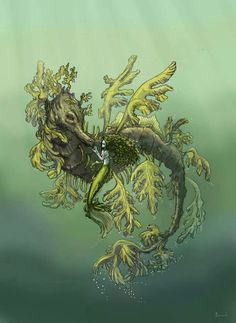 The legend tells. all the merlfolk of the ocean has born from these two. The father seadragon, and the mother kelp. Dragon Seahorse, Seahorse Art, Dragon Art, Seahorses, Octopus, Life Pictures, Art Pictures, Life Pics, Leafy Sea Dragon