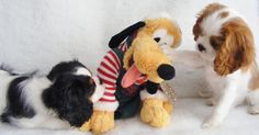 Cavaliers and Pluto