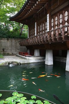koi pond at a traditional home in seoul, south korea...