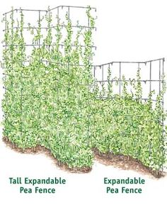 One inexpensive tall set of these and our neighbor's unsightly yard collections are gone and we have a great crop of beans... not to mention a fun project to do with the kids.