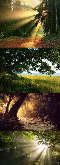 Bright Shiny Morning Woods