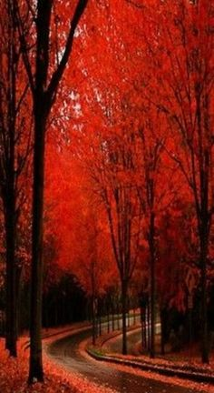 Beautiful fall colors, makes me miss home. Beautiful World, Beautiful Places, Trees Beautiful, Beautiful Roads, Rain Images Beautiful, Amazing Flowers, All Nature, Nature View, Spring Nature