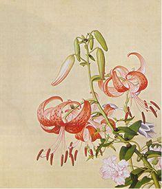 Album of Flower Paintings, Leaf 9, Lang Shining (Giuseppe Castiglione, S.J.) (1688-1766)