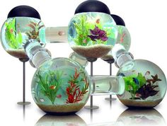 Unique custom fish aquariums!  I want this, and a place to keep it where the cats can't get near it, and someone to clean it for me.