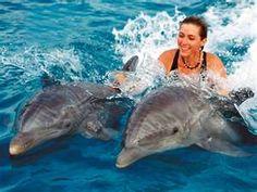 Sea Life Park Oahu - Dolphin Swim