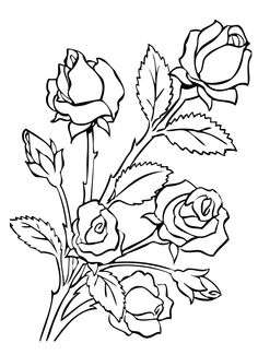 Free Printable Roses Coloring Pages For Kids Rose Adult coloring