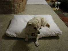 Recycle old pillows: no sew dog bed