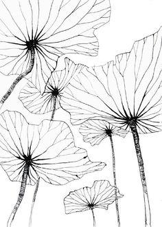Carnets de voyage - Le blog de Stéphanie Ledoux | Feuilles de lotus par Stephanie Ledoux