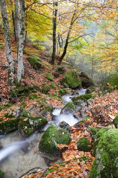 Fairy tale (photo: Jorge Maia)