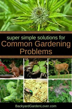 Are you looking for solutions to these common gardening problems? Weeds dear rabbits squirrels Japanese beetles hornworms poison ivy oak and sumac and many other garden problems can be solved with these simple natural tips. Herb Garden Design, Diy Herb Garden, Fruit Garden, Garden Bed, Edible Garden, Slugs In Garden, Garden Pests, Garden Insects, Gardening For Beginners