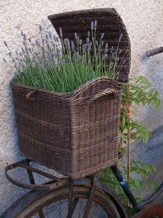 ❥ Love this basket… ♔ Lavande