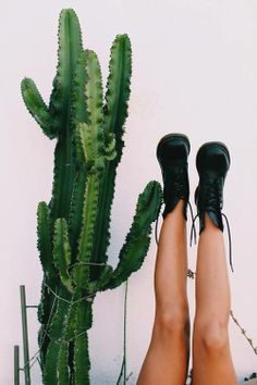 Style, Boots, Cactus, Approximate Symmetry, Scale, Green, Texture