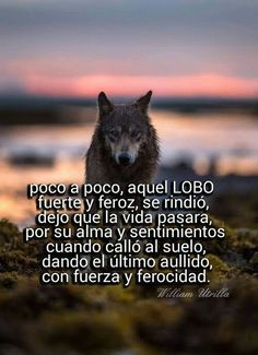 Imágenes de Lobos con Frases Tristes de Amor Wolf World, Wolf Life, Wolf Artwork, Meaningful Pictures, Wolf Quotes, Lone Wolf, Business Motivation, Werewolf, Kawaii Anime