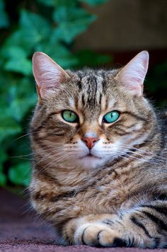 The eyes look photoshopped but I remember we had a cat that had eyes this color so I'm pinning it.