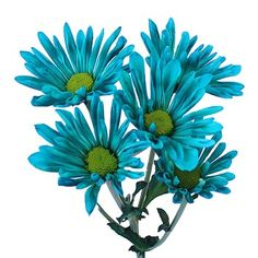 Flowerful Events | Teal Daisy | Flowerful Events
