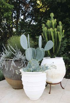 garden design Decking potted plants - 12 of the biggest home decor trends for 2019 Outdoor Planters, Outdoor Gardens, Outdoor Flower Pots, Outdoor Cactus Garden, Outdoor Potted Plants, Tropical Garden, Indoor Garden, Outdoor Decor, Walled Garden