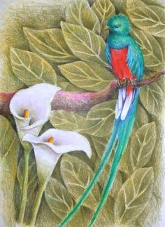 """Quetzal. The Resplendent Quetzal was considered divine, associated with the """"snake god"""", Quetzalcoatl by Pre-Columbian Mesoamerican civilizations."""