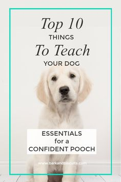 The Absolute Top 10 Things to Teach Your Dog.