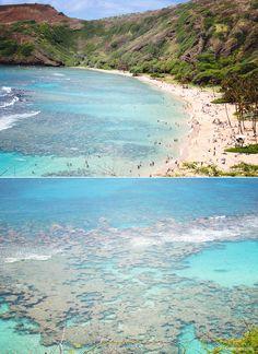 Snorkel the reefs of Hanauma Bay. #hawaii #oahu #hanauma #bay #snorkeling