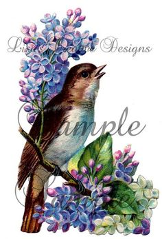 Vintage Bird Image i
