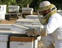 Bee and Honey Farm – Kfar Chabad has a 900-hive family project, including a store that sells a wide variety of honey-themed products.