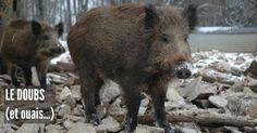 Top 10 des animaux les plus dangereux de France on nest pas à labri