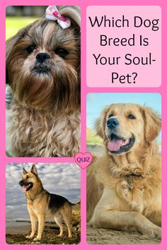 Soulmates aren't always romantic. In fact, our pets may very well be the companions that our soul has truly been looking for. If you've ever developed a deep love for a pet before, you know that there is something special about the bond that forms between