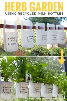 Indoor Bottle Herb Garden From Recycled Milk Bottles Creative Plastic Bottle Vertical Garden Ideas Herb Garden Design, Diy Herb Garden, Herbs Garden, Garden Hedges, Garden Fun, Rooftop Garden, Garden Trees, Easy Garden, Succulents Garden