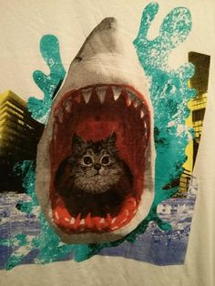 The ever popular, cat in a shark.