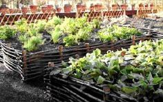 cheap raised bed gardening - Google Search