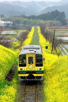 Isumi Line in Chiba, Japan いすみ鉄道 Kyoto, Beautiful World, Beautiful Places, Places To Travel, Places To Visit, Trains, Chiba Japan, Taj Mahal, S Bahn