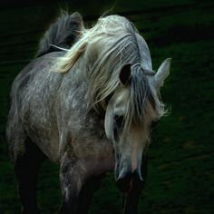 Arabians are beautiful