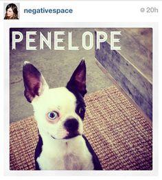 Penelope, the dog