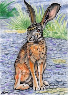 ACEO Original art animal hare rabbit realism ears bunny illustration - SMcNeill