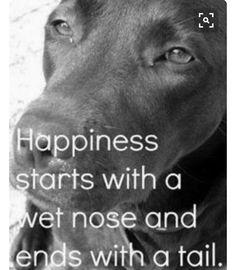 #risenshine #pitbulls #pittielife #pitbullsofpintrest #dontbullymybreed