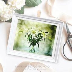 St Josephs Lilies photography printable for wedding ideas  https://www.etsy.com/uk/listing/575135792/st-joseph-lilies-white-flowers-modern?ref=shop_home_active_3  #wedding #weddingideas #stjosephlilies #lilies #lily #flowers #white #floral #design #urbanrusticnomad