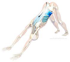 Degenerative Disc Disease, The Sushumna Nadi and Yoga. #yoga #fitness #therapy
