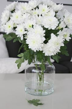 Pom Pom Chrysanthemum Small Globular Bloom Somewhat Flat When Young But Fully Round When