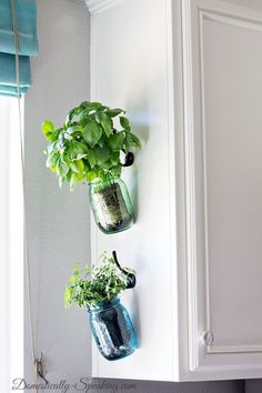 Hanging Fresh Herbs in Mason Jars - Create easy access to fresh herbs while adding color to your kitchen! A DIY garden idea for your home.