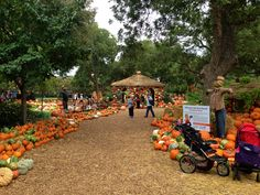 The Dallas Arboretum and Botanical Gardens is a great place to take the family! Check out their Seasonal Festivals & Public Events: http://www.dallasarboretum.org/visit/seasonal-festivals-events