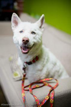 Miley, rescued from trash pile by Eldad from Hope for paws. ♥♥♥ #hopeforpaws #eldadhagar #miley
