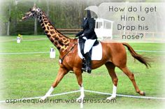 How do I Get him to Drop his Nose?