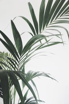 leaves – Best Garden Plants And Planting Green Plants, Tropical Plants, Aesthetic Backgrounds, Aesthetic Wallpapers, Cute Wallpapers, Wallpaper Backgrounds, Pastell Wallpaper, Palm Tree Leaves, Plant Background