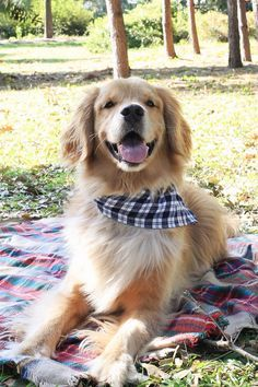 Easy No Sew Flannel Dog Bandana DIY. Click for the tutorial! Perfect pet accessory for the fall!