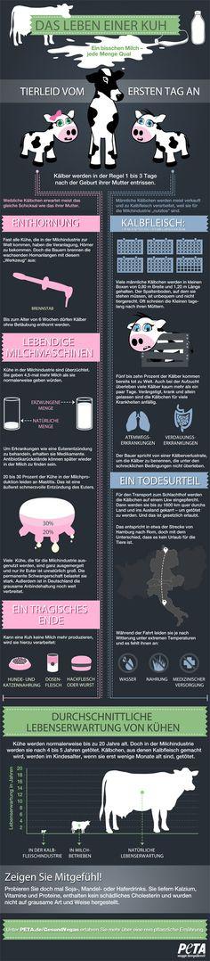 Infografik: Das Leben einer Kuh Quelle: peta.de Diese Industrie wollen wir nicht mehr unterstützen! Es gibt zahlreiche pflanzliche Alternativen. Die Vielfalt ist riesig. Probiert es selbst!