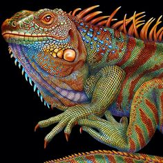 Shared by TimJeffsArt. The Iguana and Chameleon, color pencil, x Realistic Drawings, Love Drawings, Animal Drawings, Pencil Drawings, Art Drawings, Illustration Photo, Pencil Drawing Tutorials, Drawing Ideas, Coloured Pencils