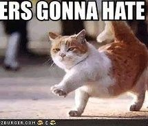 1000 images about things that make me laugh on pinterest - Funny animal pictures with words ...