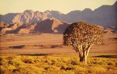 Richtersveld Cultural and Botanical Landscape | Road to the Richtersveld. South Africa. WegRy