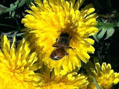 If you really want to help save the honey bees...